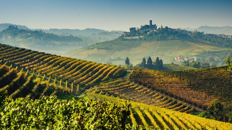 UNESCO protected vineyards in Lange, Piedmont | © Shutterstock/Giorgio1978