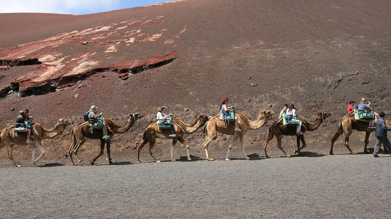 Lanzarote Camel Tour | © Frank Vincentz / WikiCommons