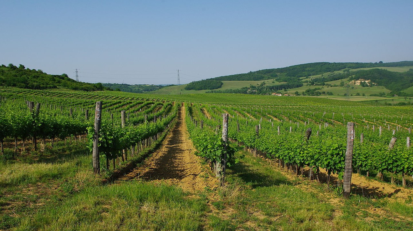A Wine Lover's Guide to Hungary's Wine Regions