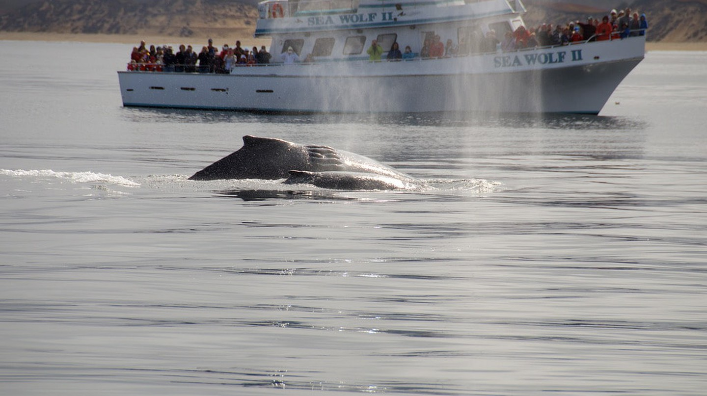How to Go Whale Watching in Monterey, CA