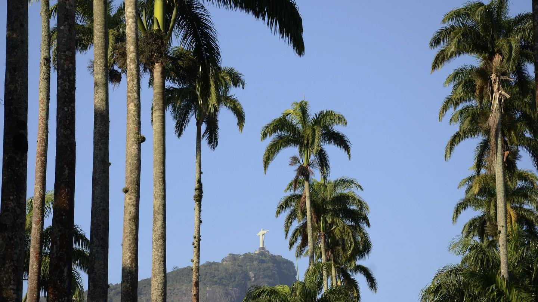 The Best Bars Near Jardim Botanico, Rio de Janeiro