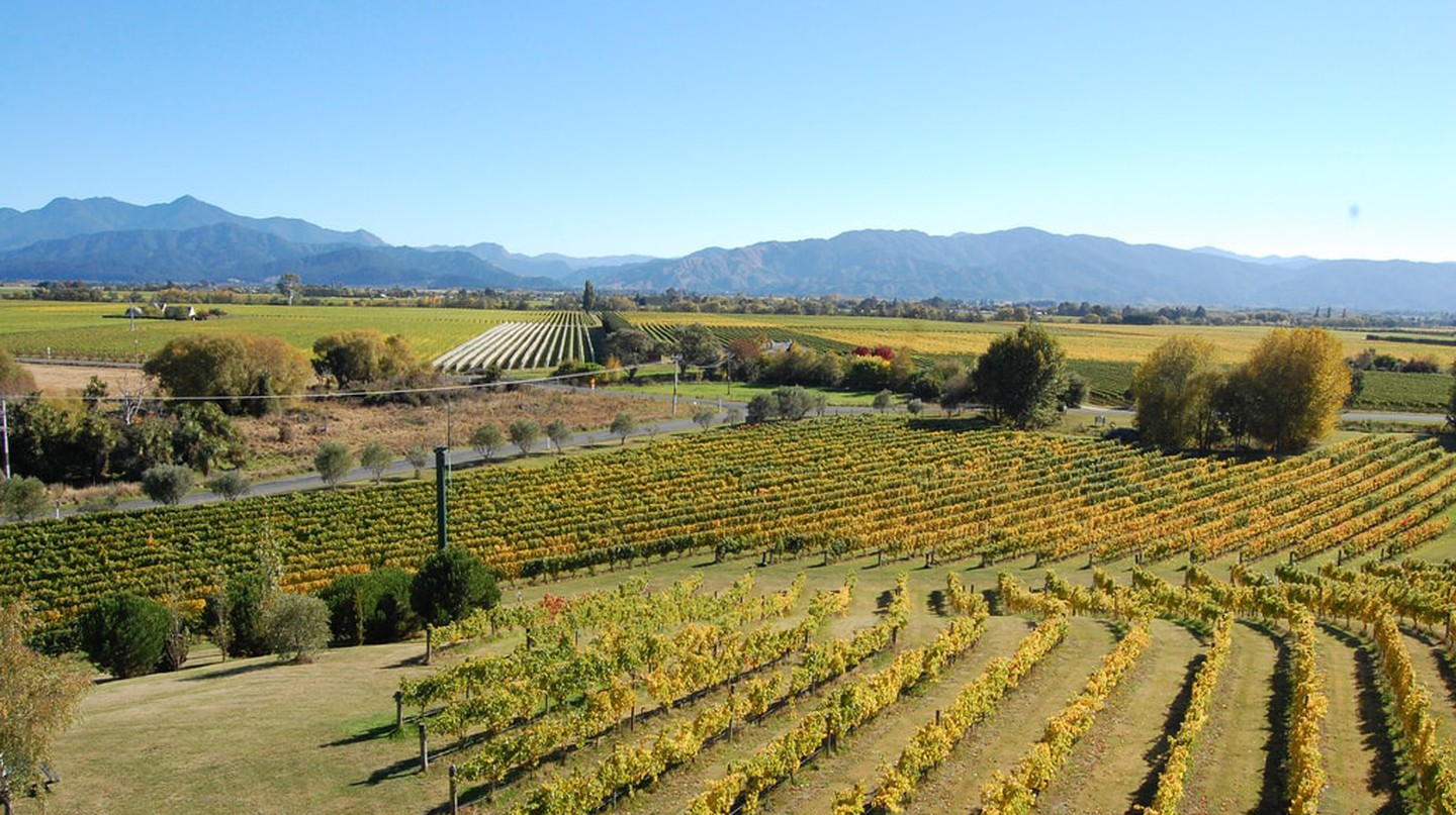 Marlborough vineyards | © unkle_sam/Flickr