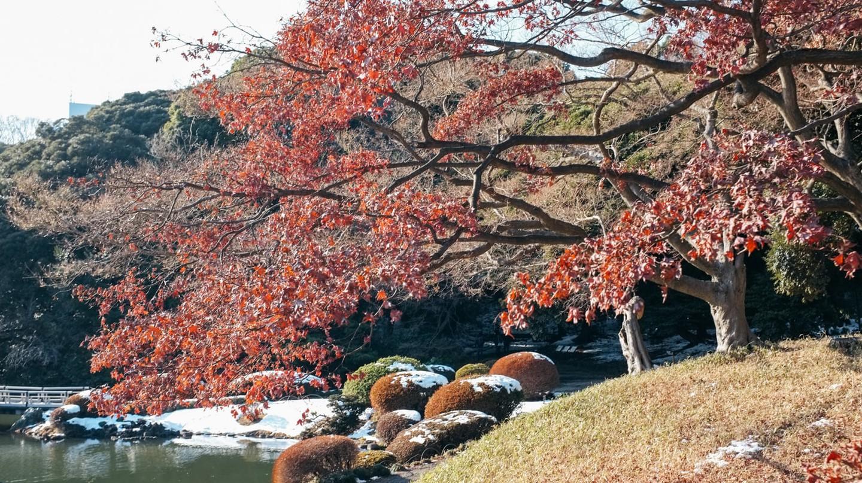 A Photographer's Guide to Tokyo's Shinjuku Gyoen National Garden