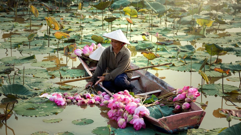 Lotus Pond | ©sutipond/Shutterstock