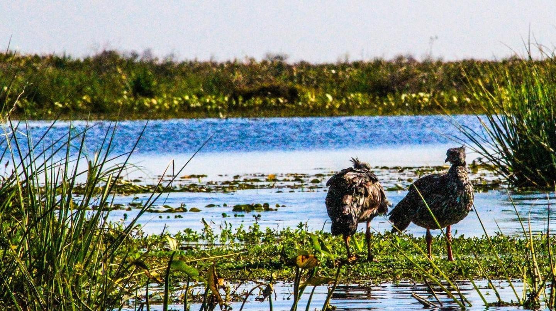 Ibera Wetlands | ©Dianne Graham/Flickr