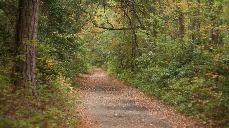 First Landing State Park | ©Brent Hoard / Flickr
