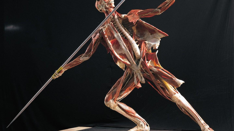 Body Worlds RX | Courtesy of Body Worlds RX