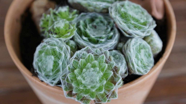 Cactus plant as a gift | © strecosa/Pixabay