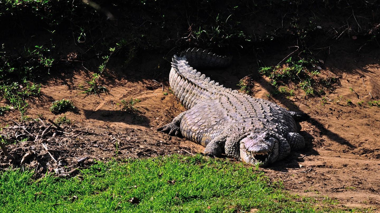 A very fat nile crocodile basking in the sun   © Steve Slater/Flickr