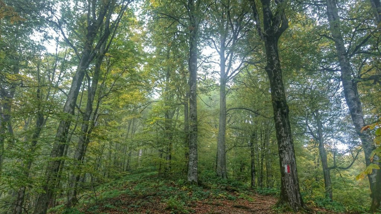 Lagodekhi path | © Baia Dzagnidze
