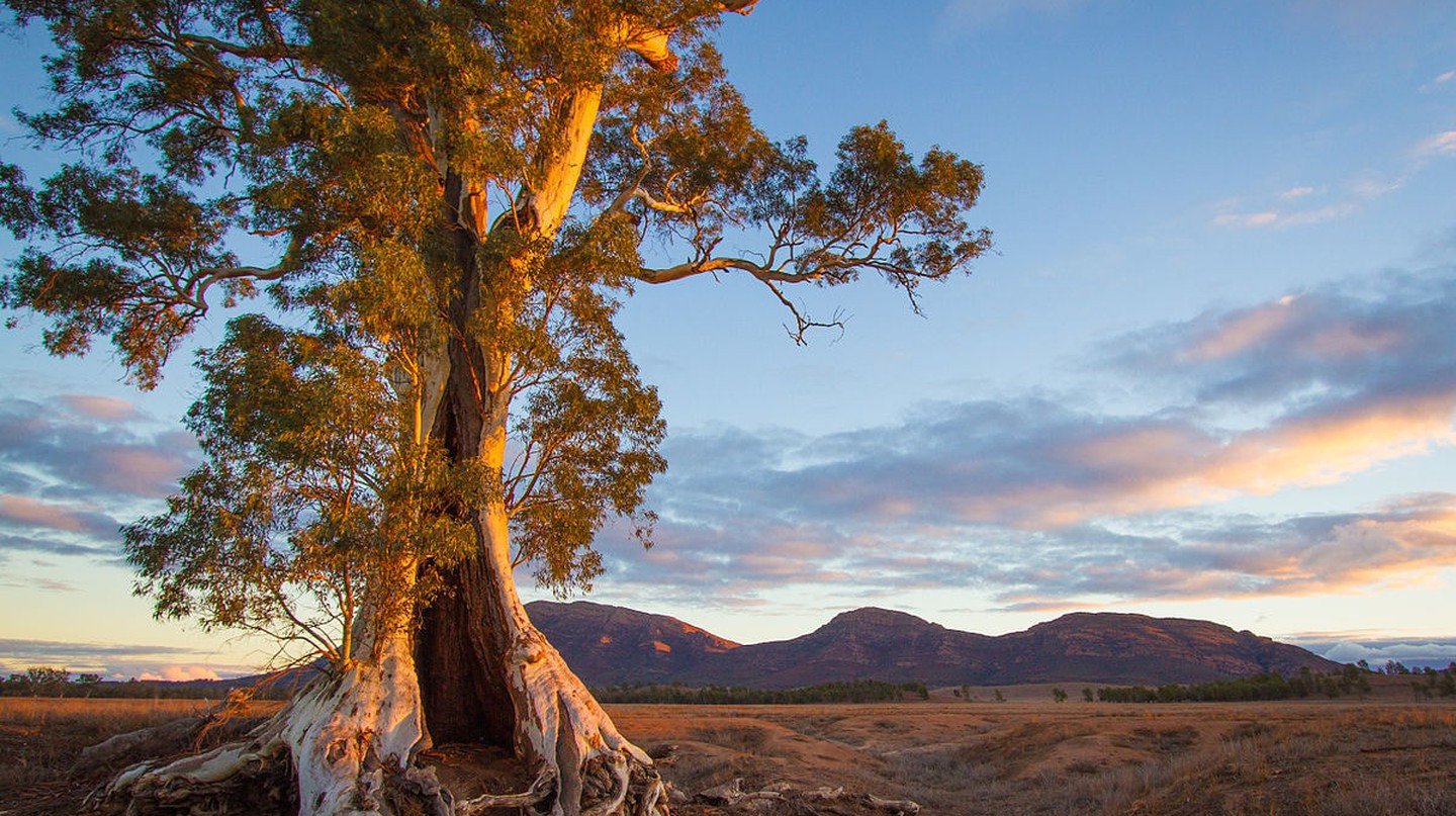 Ikara-Flinders Ranges National Park | © Jacqui Barker/Wikimedia Commons