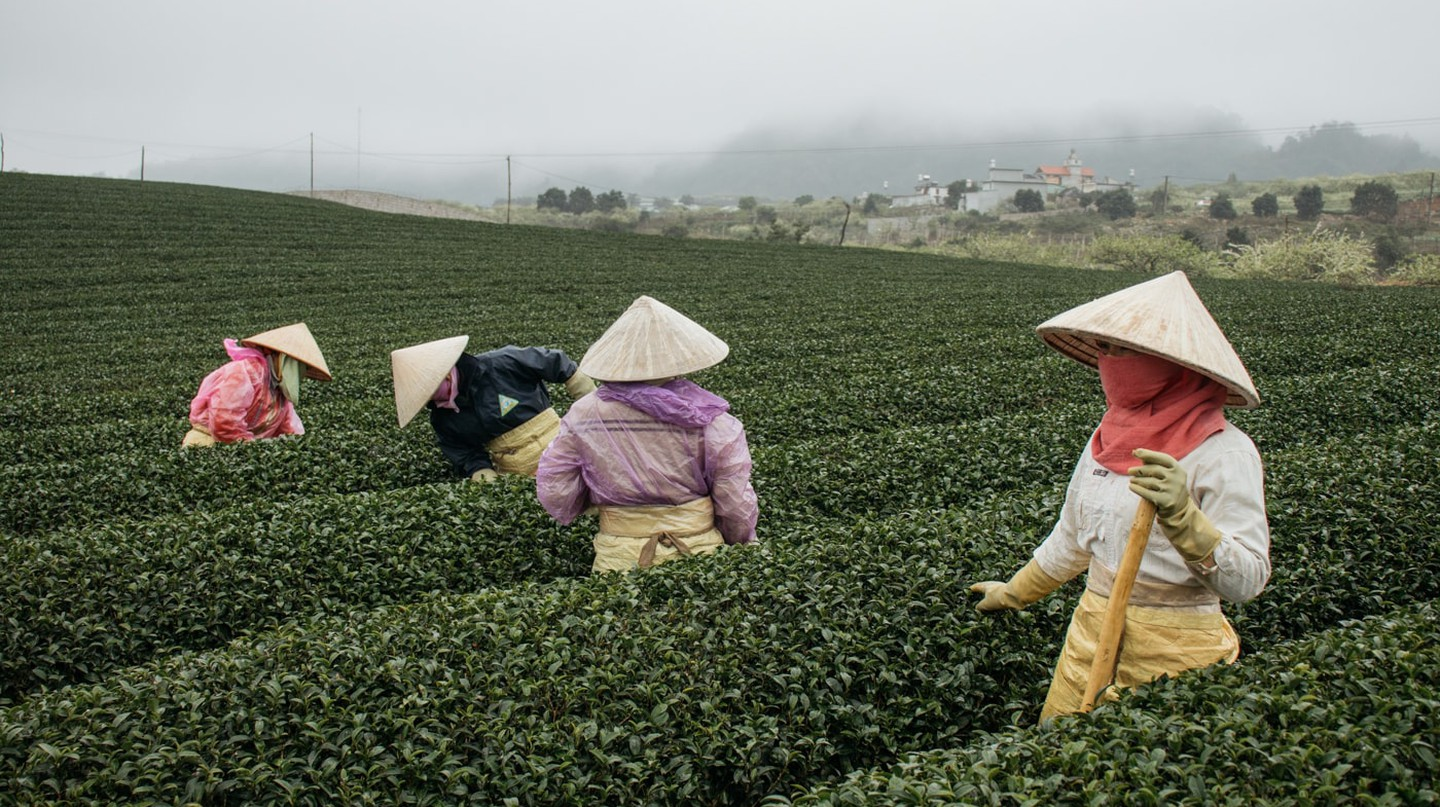 A day at the Moc Chau Tea Plantations |