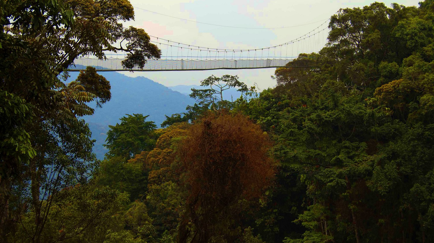 The canopy walk over the rainforest is one of the park's highlights | Courtesy of Rwanda Development Board