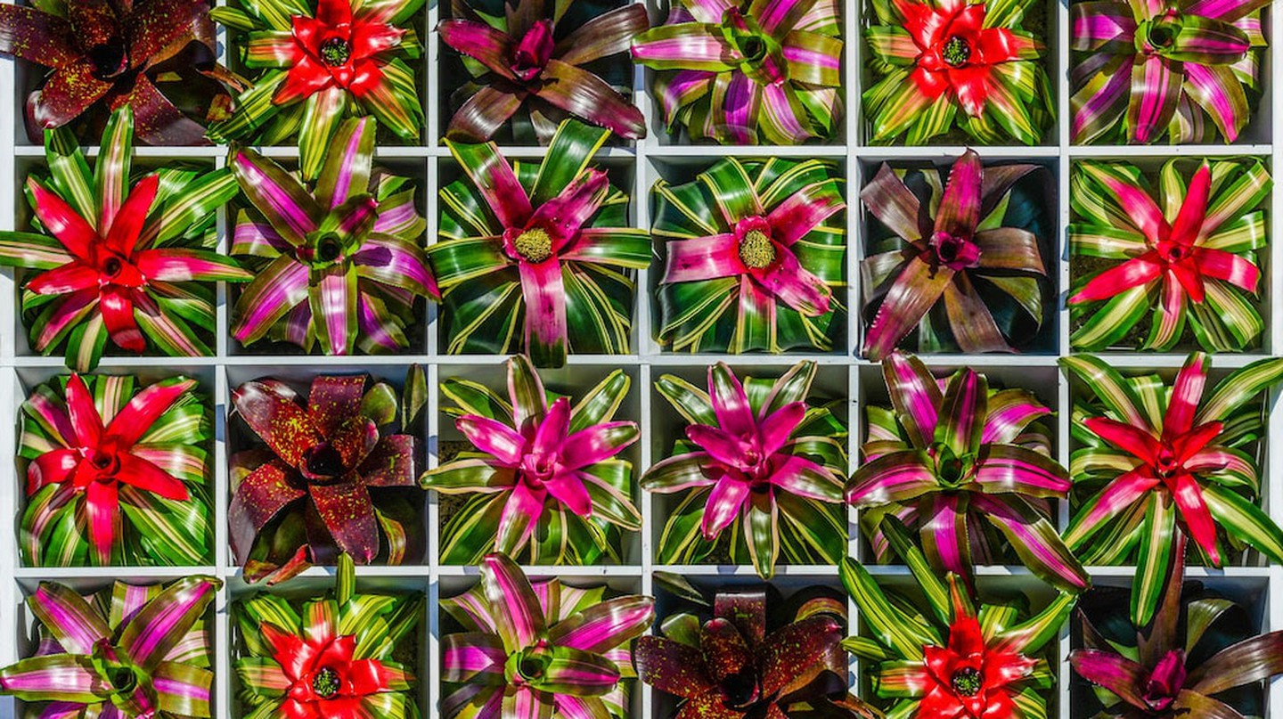 Bromeliad Square | Photo by Darren Erickson | Courtesy Marie Selby Botanical Gardens