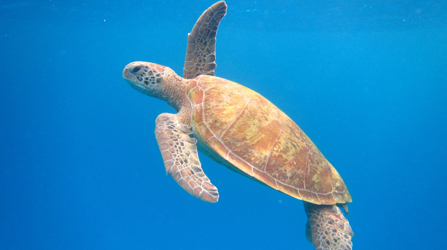 Snorkel with turtles on Lady Elliot Island