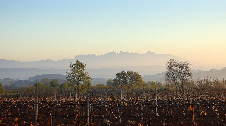 The Penedès wine region © Angela Llop