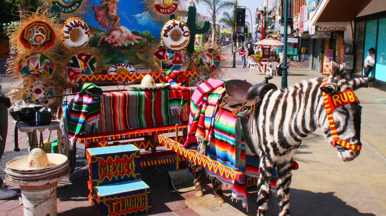 Zebra in Tijuana