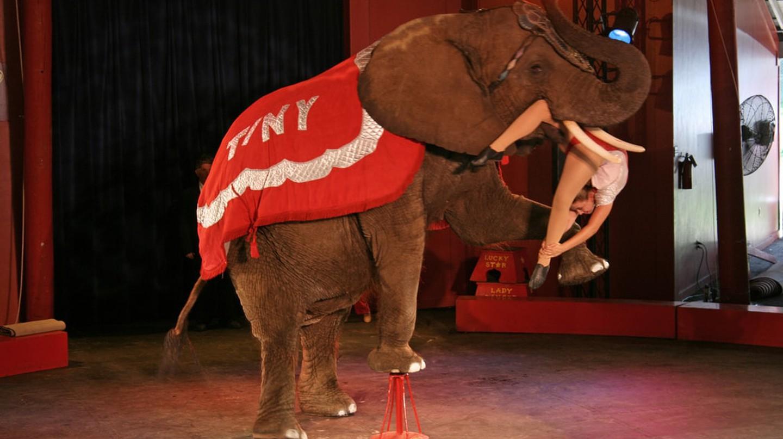 Big Top Circus Performance in Baraboo, WI