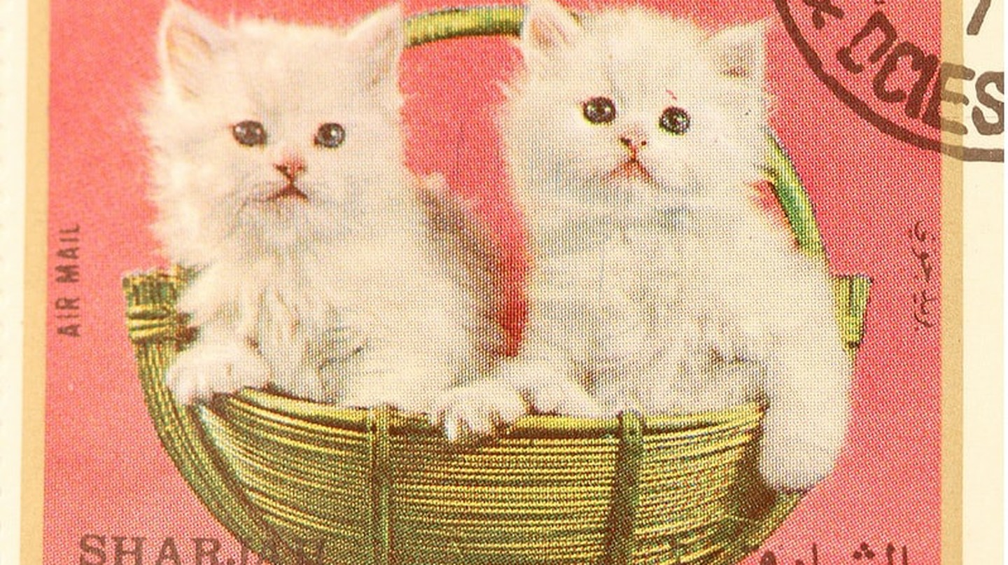 Two kittens on a United Arab Emirates stamp.