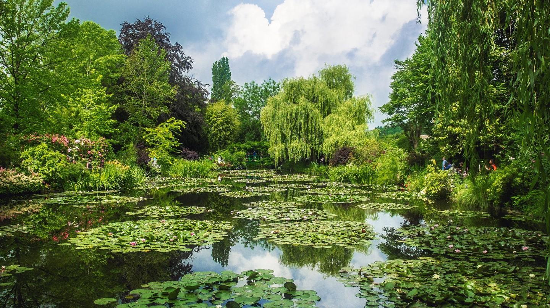 Water lillies in Monet's Garden