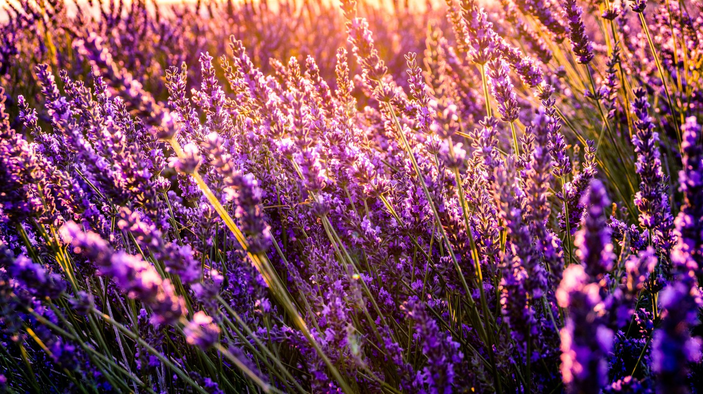 There are some lovely images captured in books about Provence | © Leonard Cotte/Unsplash