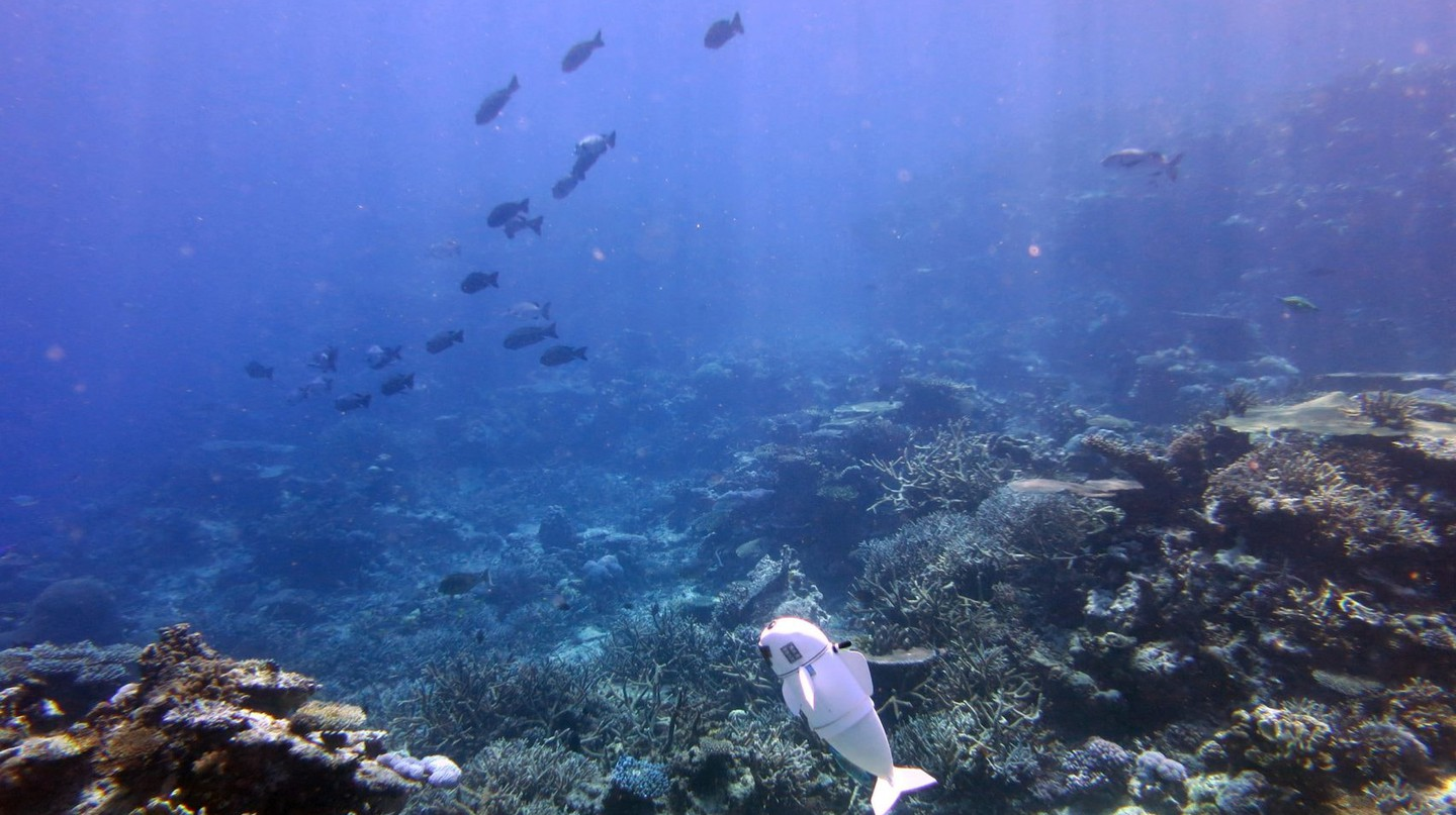 In Fiji S Rainbow Reef A Robotic Fish Is Documenting