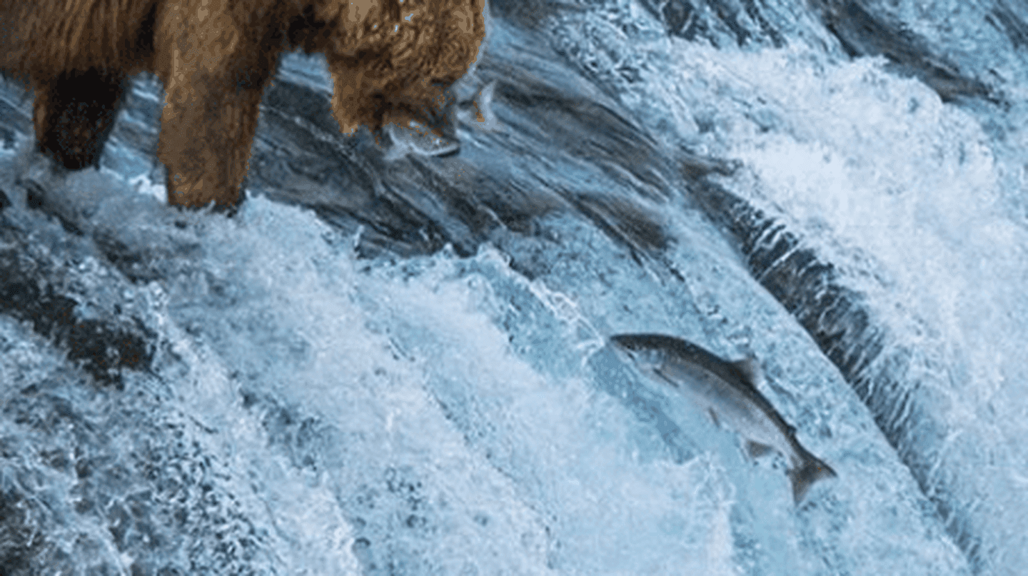A Guide to Salmon Viewing in Alaska