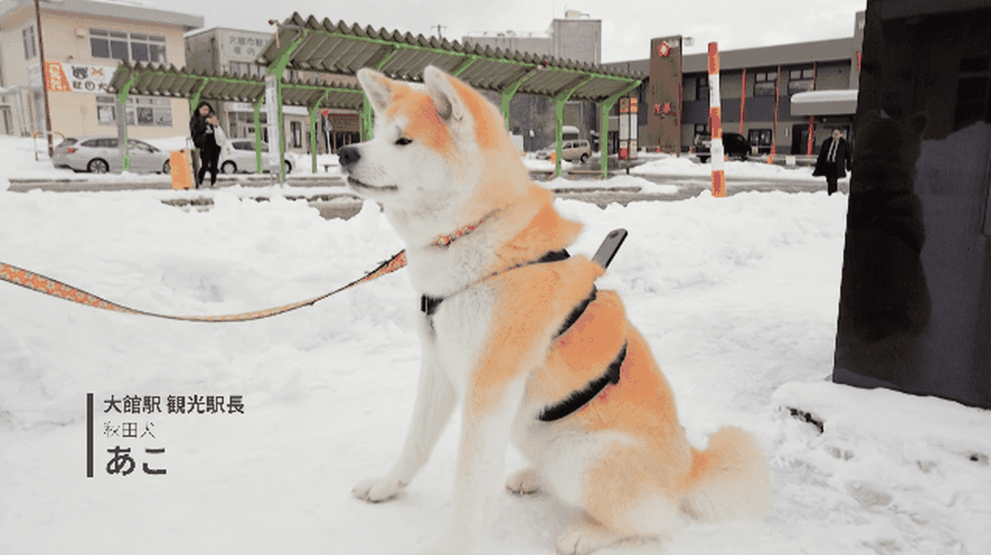 """Dog View"" from Akita-inu, home of Japan's adorable Akita dogs 