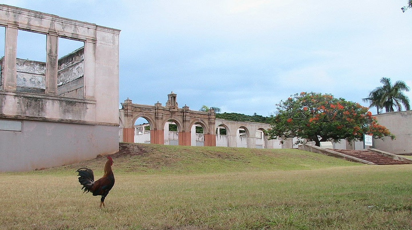 Ruins of Old Maui High School with a male red junglefowl in the foreground