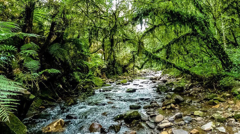 Brazilian nature