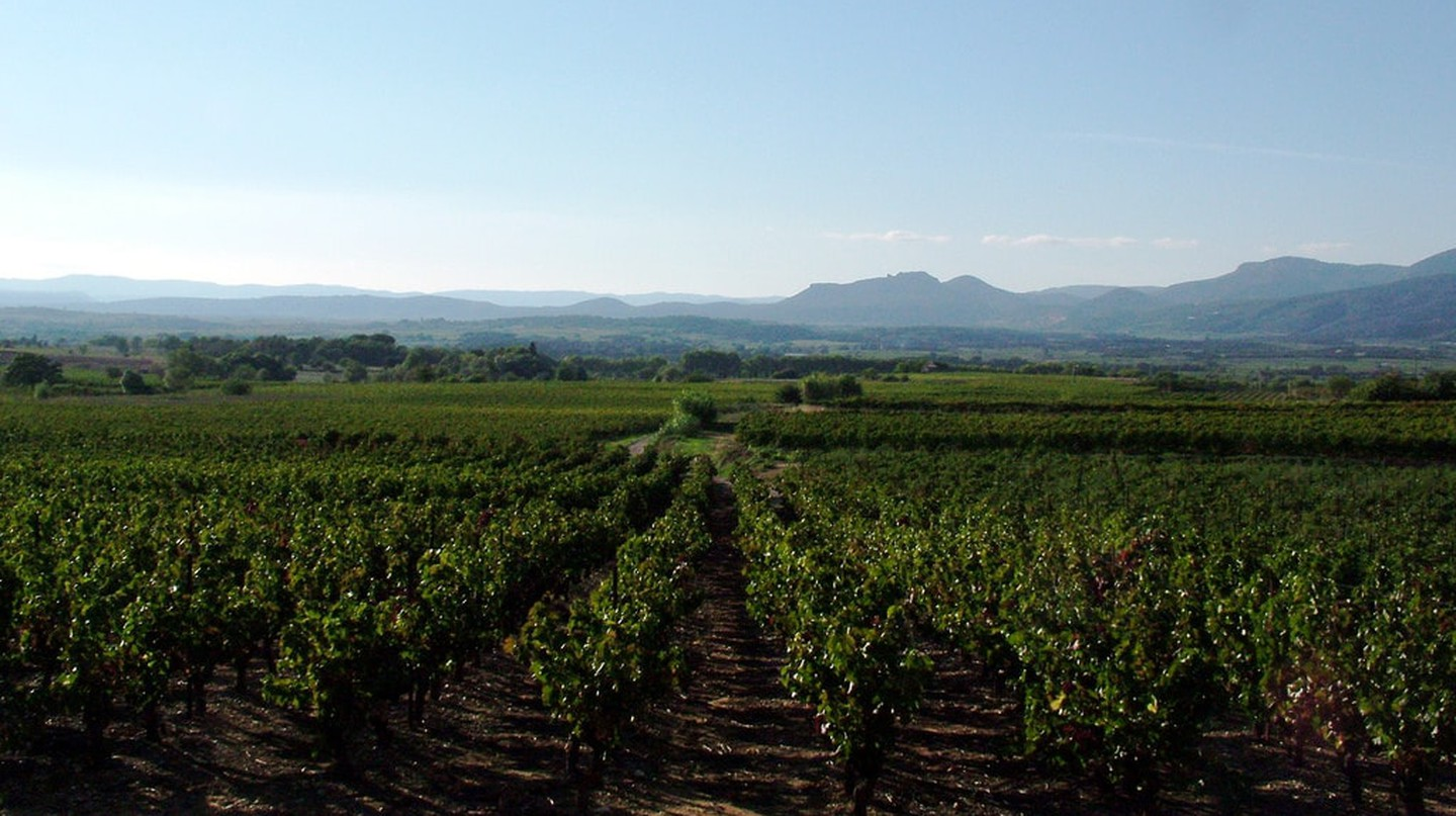 Vineyards of the Languedoc
