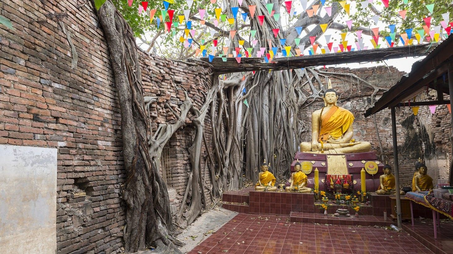 Trees growing around the brick walls of Wat Sai, Singburi