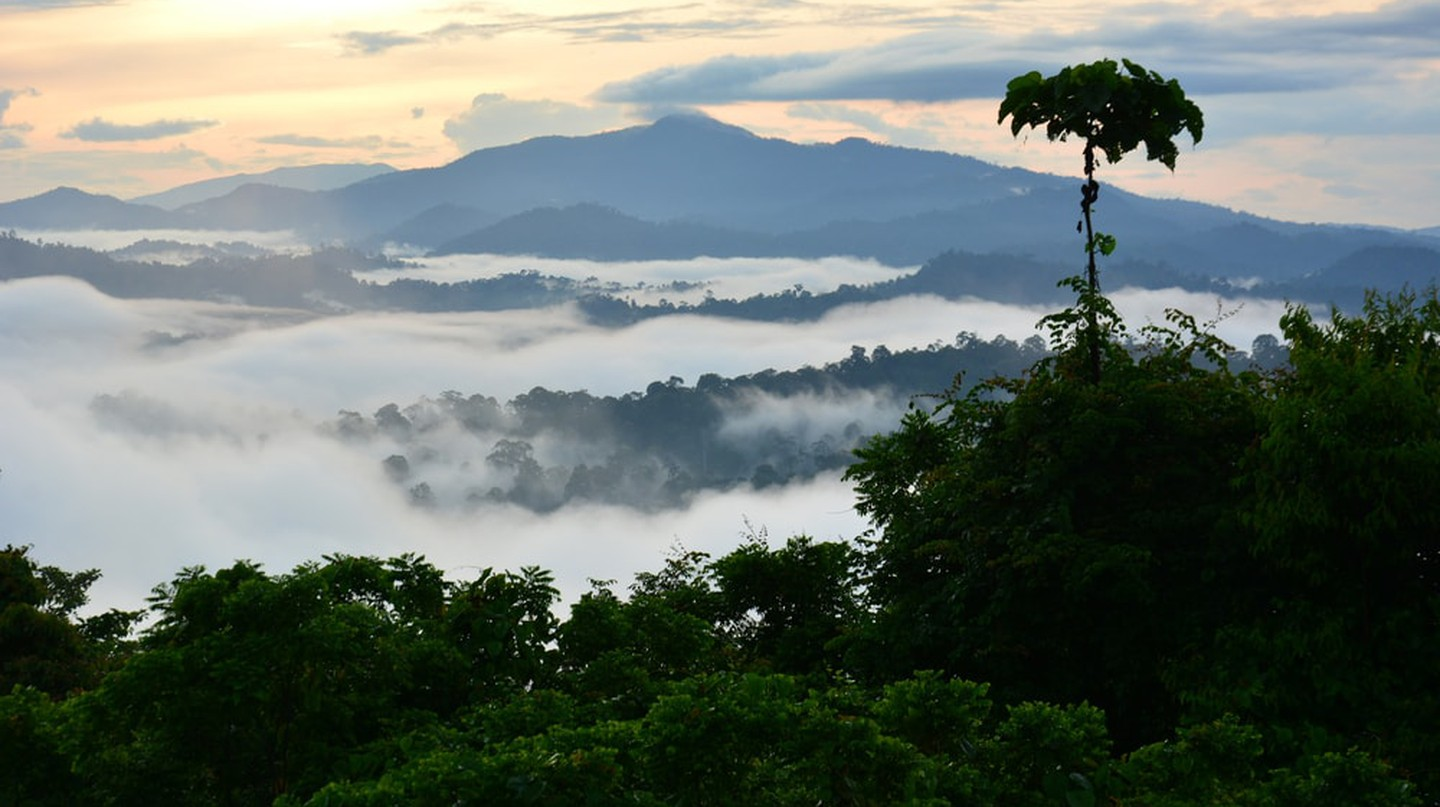 View of the Danum Valley rainforest during sunrise