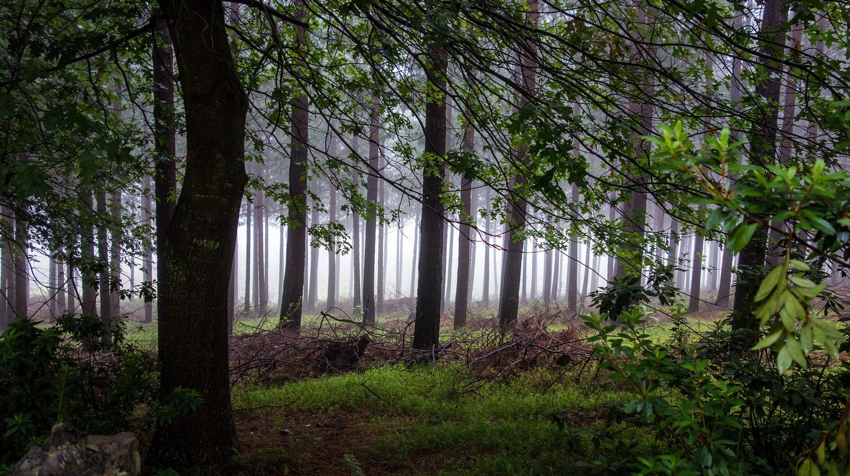 Stunning Hogsback forest