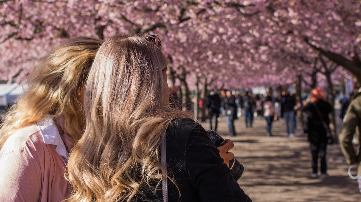 People standing under the cherry trees in Kungsträdgården in spring