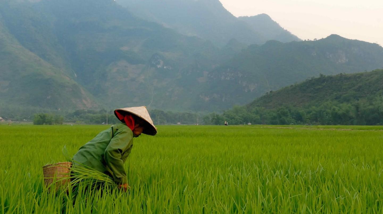 Vietnam's stunning countryside