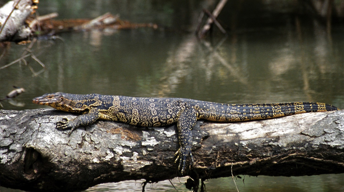 Chilling out in Khao Yai National Park, Thailand | © Bernard DUPONT / Flickr