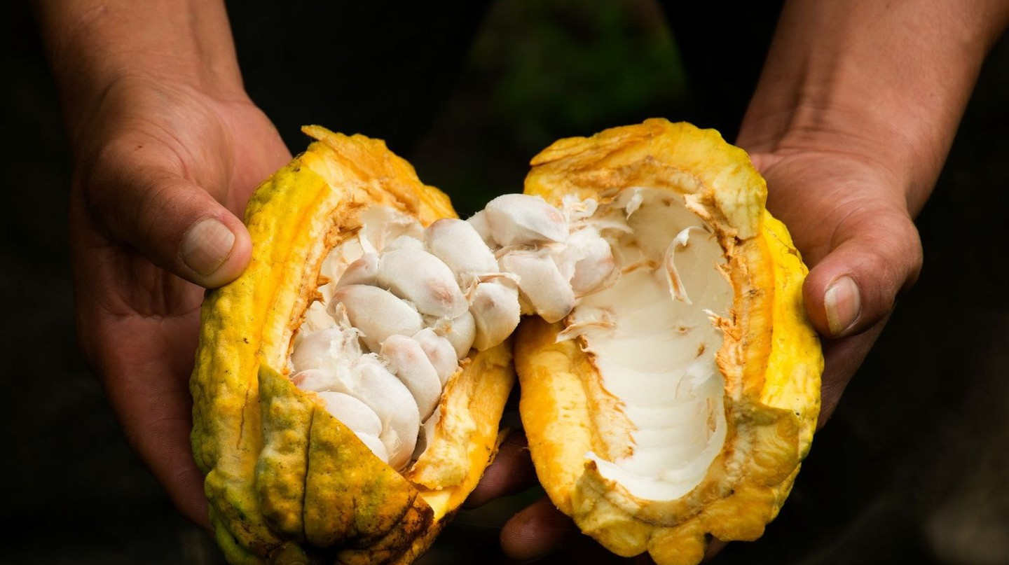 Fresh Cacao │© carlosmedinav77 / flickr