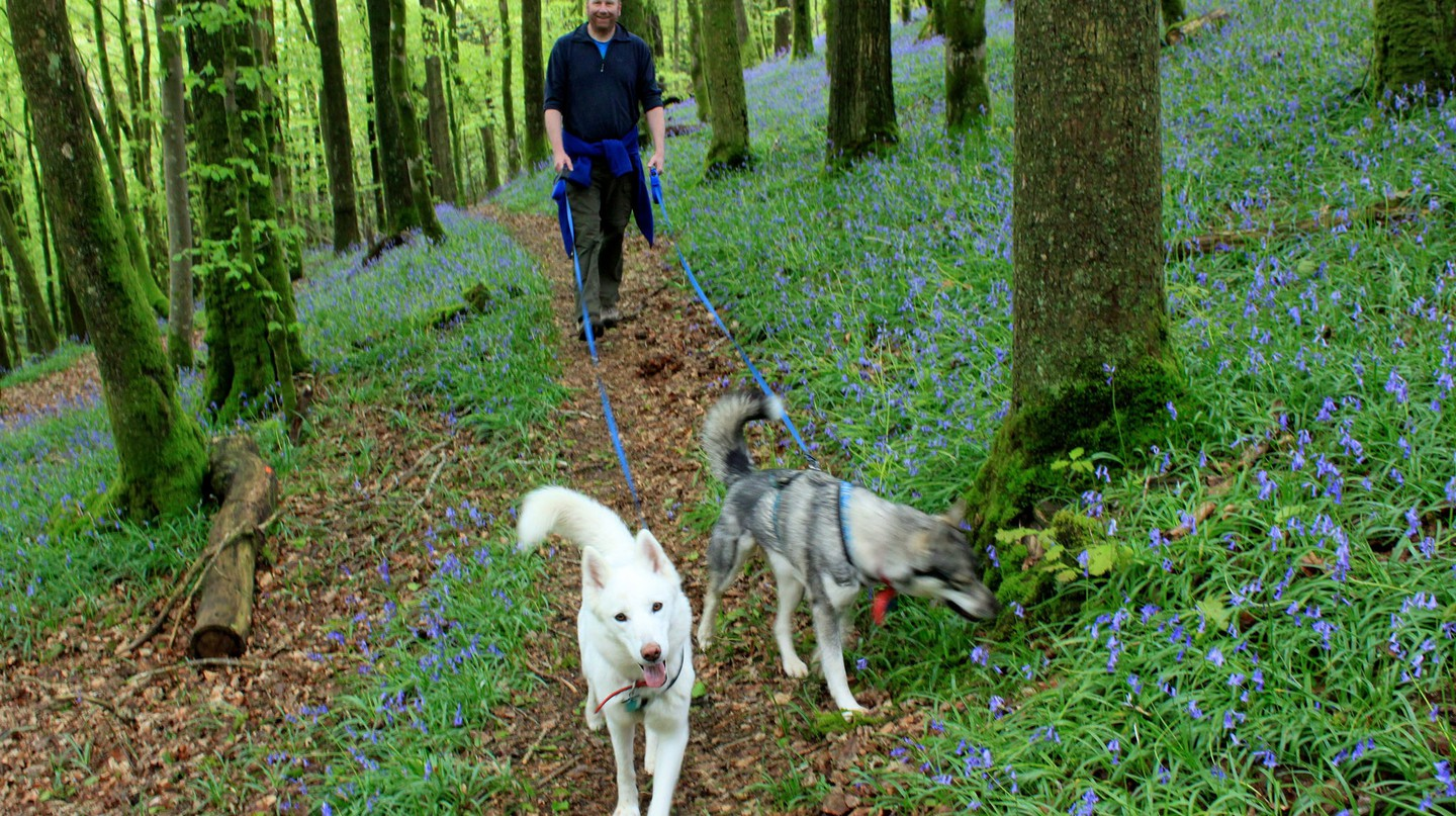 Go hiking with huskies in France