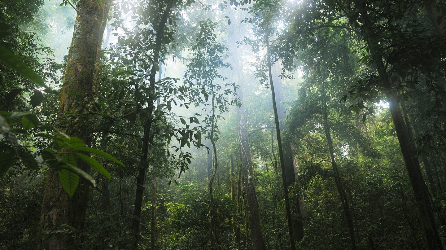 Your old cell phone will know help fight deforestation
