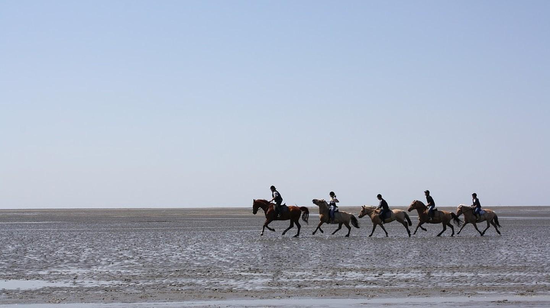 Horse riding in Neuwerk