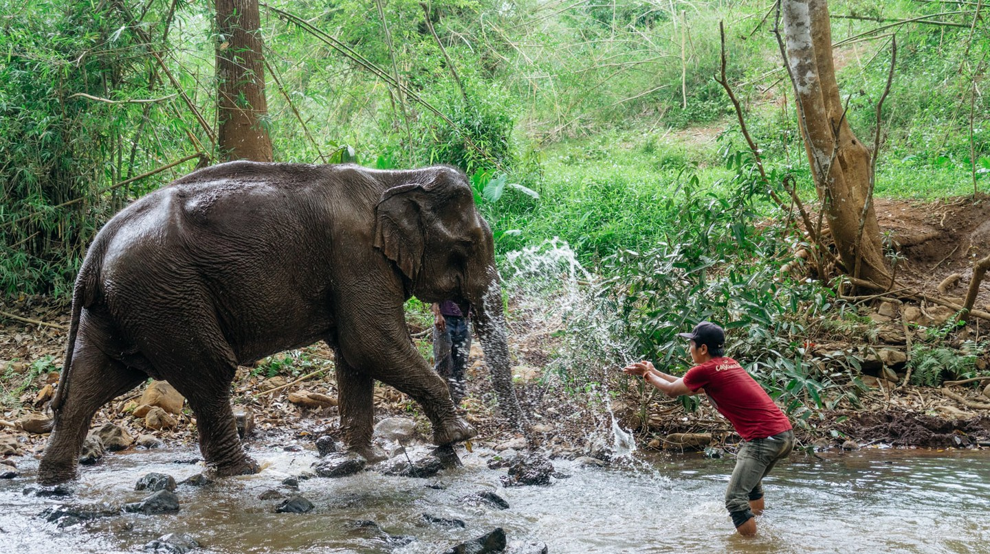 There are swathes of eco-experiences to be had in Cambodia