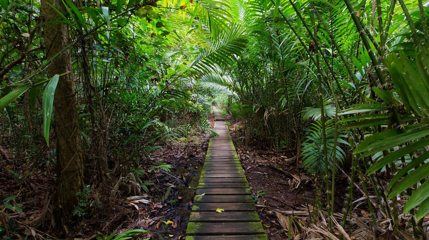 Get off the grid by exploring the jungles of Malaysia