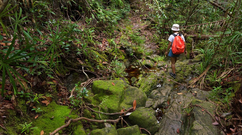 Jungle trekking in Borneo