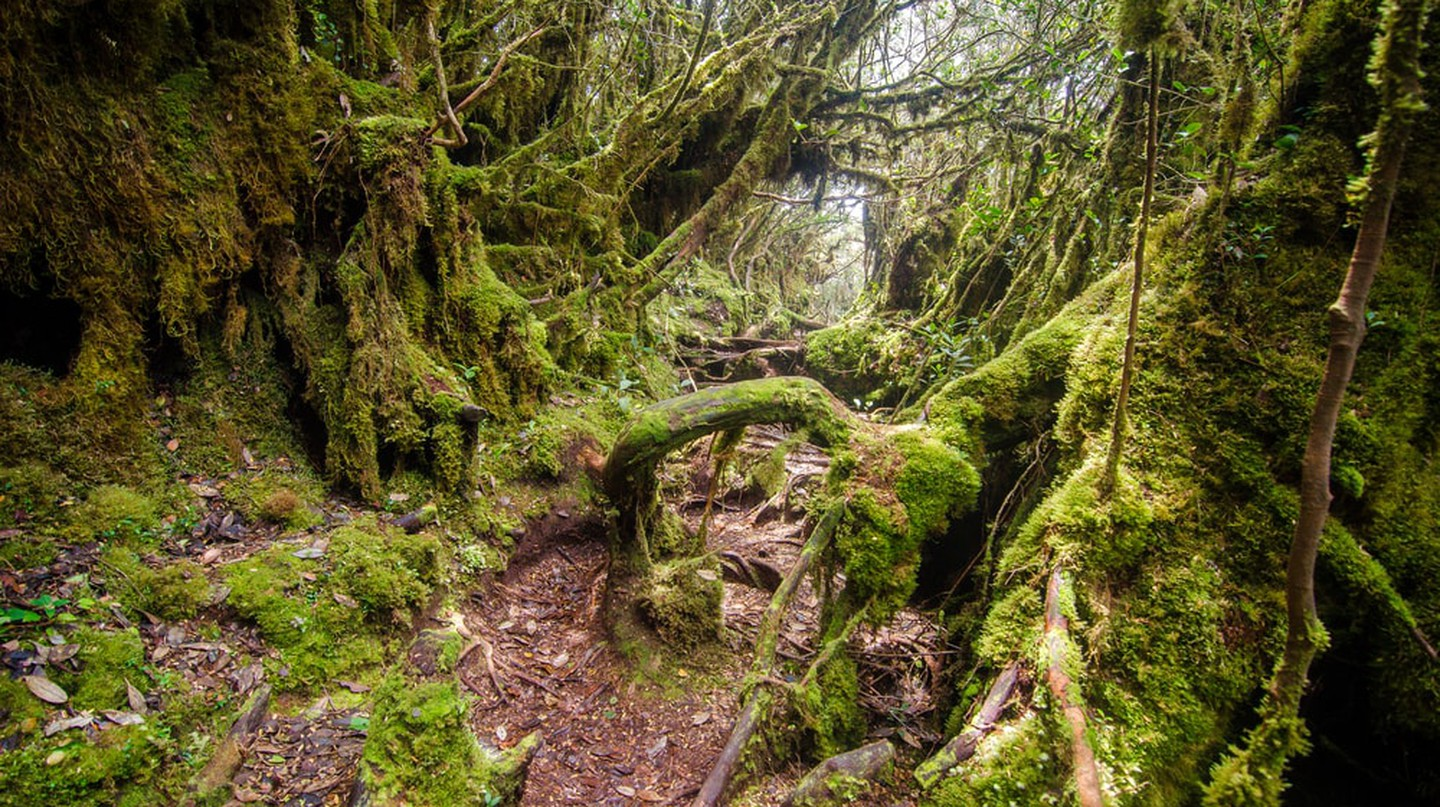Malaysian mossy forest