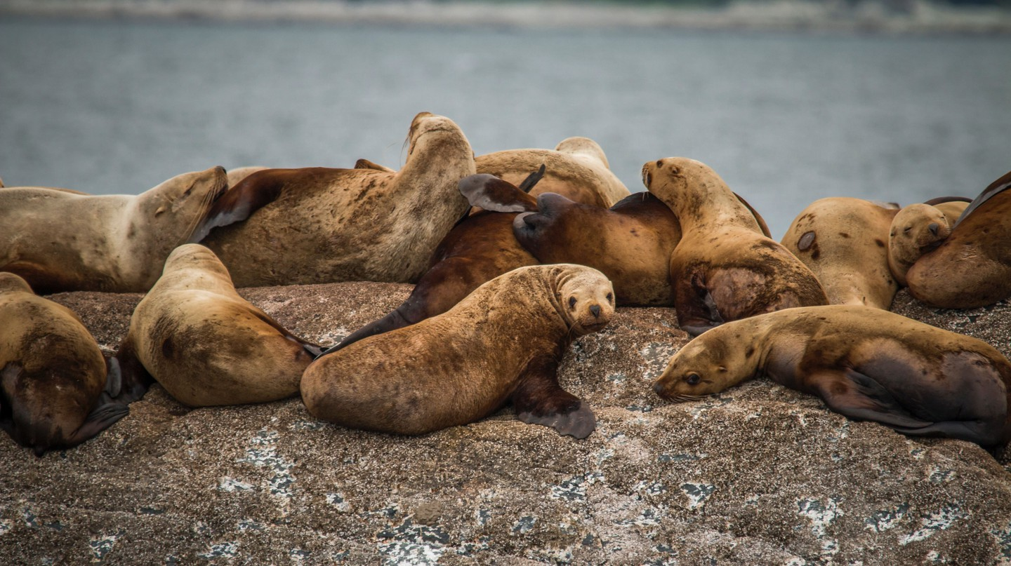 You might be lucky enough to spot sea lions on Isla del Farallón