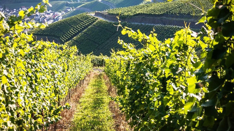 Ahr Valley vineyard