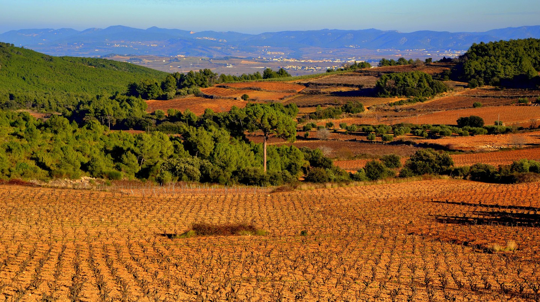 Vinyes de Can Grau, Sant Martí Sarroca
