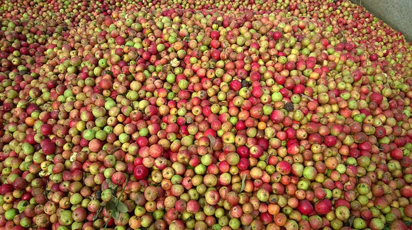 Somerset apples ready to be made in cider.