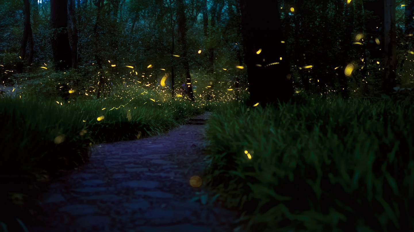 Fireflies glowing just after sunset